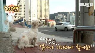 버스정류장에서 -1화- ㅣ  Dog Waits For Someone At The Bus Stop Every Day EP1