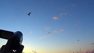 Захватывающая охота на гусей 2019!!!  20 верных налетов!!!