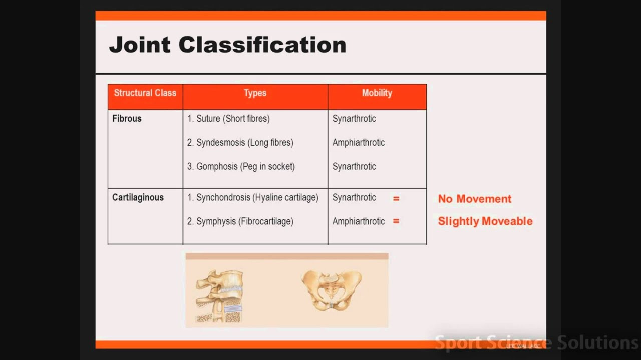 Joint Classification Youtube Суглоби грудної клітки (articulationеs thoracis). joint classification