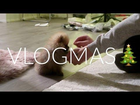 VLOGMAS // 13. desember - Simen vlogger på jobb og Bella lærer flere triks