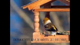 Покорми птиц зимой(Приходите в Орнитарий, мы выдадим Вам корм для птиц, которым Вы можете угостить птиц в кормушках парка Сокол..., 2015-01-18T02:56:19.000Z)