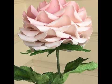 Unduh 66 Gambar Bunga Rose Warna Pink Paling Cantik