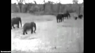 Afryka Płd. - słonie