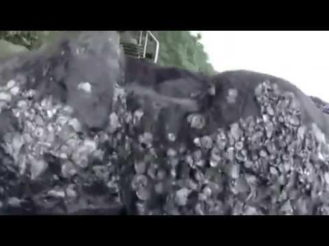 LE GRAND REQUIN BLANC-Rencontre sans protectionde YouTube · Durée:  1 minutes 16 secondes
