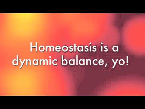 Homeostasis Song by Mr. Barnett