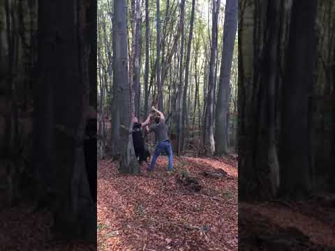 Guy Gets Hit in Face with Branch Breaking Down Tall Tree - 1033582