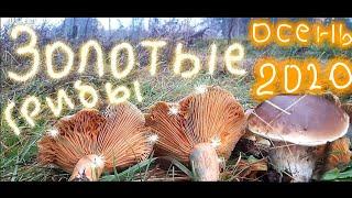 Осенние грибы Виды осенних грибов Как отличить съедобные грибы от ядовитых Грибы Беларусь 2020