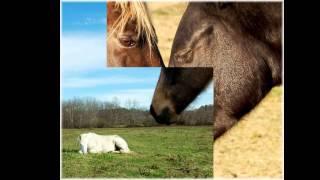 видео про лошадок