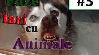 faze tari cu animale #3