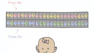 علم الجينات جزء 3 من أين تأتي جيناتك