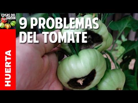 9 Problemas frecuentes en el cultivo de tomate y Soluciones - 9 Tomato problems @cosasdeljardin