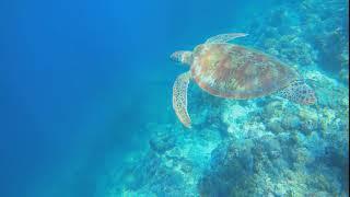 세부 모알보알 바다거북