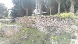 בית סאחור המקום שבו התגלה המלאך לרועים. והמון של רות ובועז thumbnail
