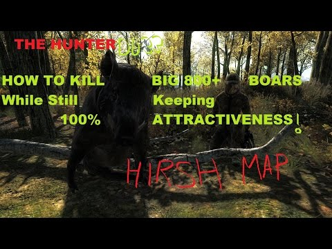THE HUNTER: DD33 How To Kill BIG 800+ Boars & Keeping 100% Attractiveness!!