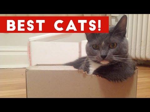 Funny Cat Videos Compilation December 2016 | Funny Pet Videos