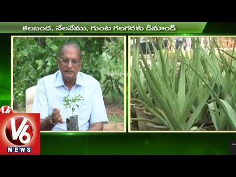 Sagubadi | Special Focus on Ayurvedic Medicinal Plants Cultivation l V6 News