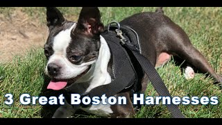 3 Great Boston Terrier Dog Harnesses