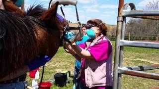 Future horse dentist