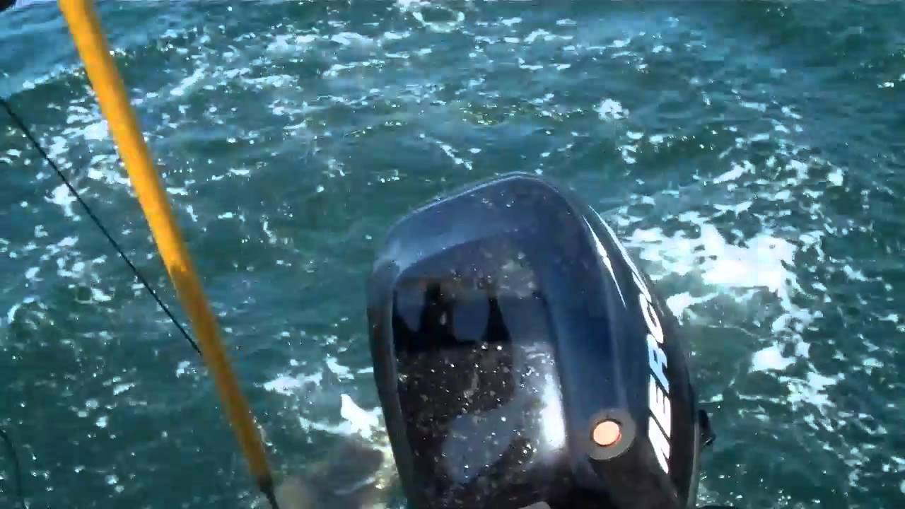 Halibut fishing with north shore charters form orcas for San juan island fishing charters