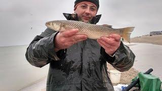 Рыбалка на пеленгаса!