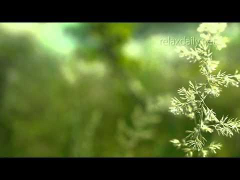 Музыка для СПА, салона красоты, солярия| Фоновая музыка