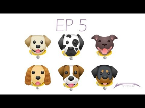1st Nature Thoughts: Ep 5: Which Is The Cutest Breed of Dog?