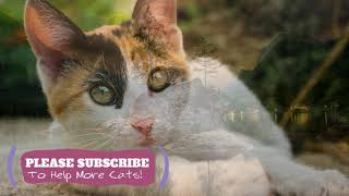 2 Hours Soothing Music For Cats. Try it Today and Be Surprised! Cat Sleep Music ☯LCZ89