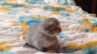 котёнок 20 дней) котенку 20 дней) первые шаги котенка, котенок учиться ходить.