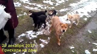 Кормим Бездомных Собак на даче! Щенки дворняжки