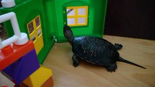 Домик для черепахи сделать своими руками))) Черепаха на прогулке)))