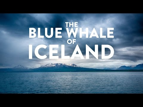 The blue whale of Iceland in 4K