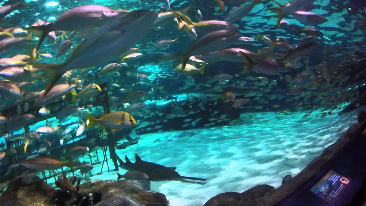 Underwater Shark Tunnel Myrtle Beach SC