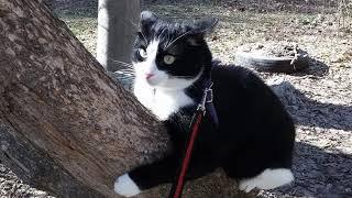 ЧЕРНО БЕЛЫЙ кот СТЁПКА 10