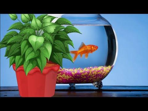 Вопрос: Можно ли поливать комнатные цветы водой после варки овощей?