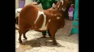 Barkas funny video SHAIK MUHAMMAD(, 2017-01-22T16:53:01.000Z)