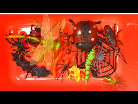 Learn Bug, Insect, Lizard Names English Korean 곤충 벌레 파충류 물놀이하며이름 배우기 영어