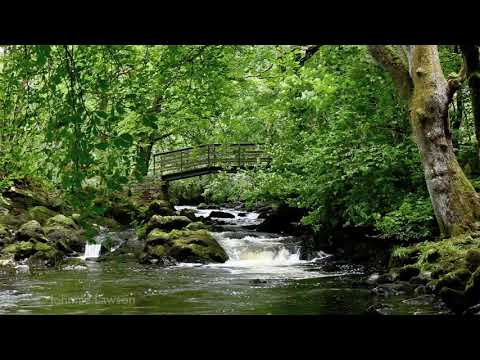 3D LANDSCAPE-Relaxation Meditation-Nature Sounds-Flowing Water-Bird Song-Wood Sounds-3D River