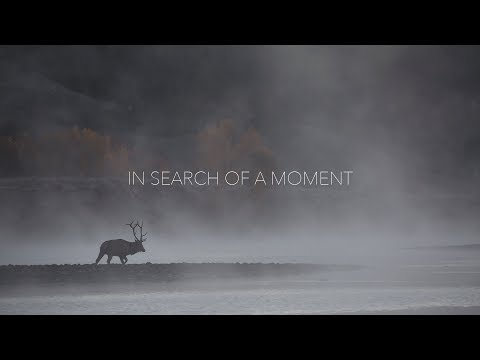 In Search Of A Moment // Jake Davis