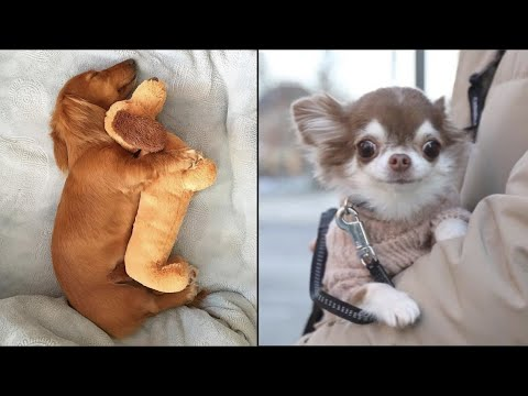 AWW CUTE BABY ANIMALS Videos Compilation cutest moment of the animals – Soo Cute! #35