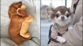 AWW CUTE BABY ANIMALS Videos Compilation cutest moment of the animals  Soo Cute! #35