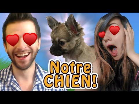 ON A ADOPTÉ UN CHIEN ! - Skyyart, Chelxie et Moshie
