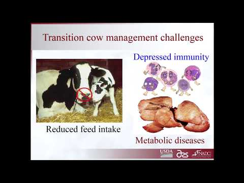 Phibro | Health and Immunity in Transition Cows