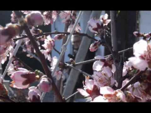 maggie reilly wait  primavera HD 640x360 XVID Ampliar Pantalla