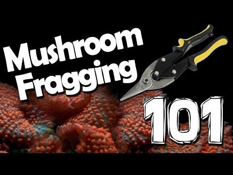Mushroom Fragging 101
