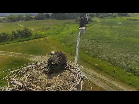 Osprey Nest - Charlo Montana Cam 07-11-2017 10:57:37 - 11:57:37