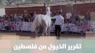 تقرير الخيول من فلسطين
