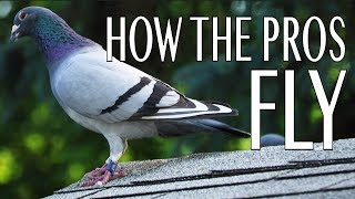 How The Pros Fly (Short Pigeon Racing Documentary)
