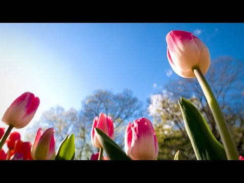 Music of nature.  Flowering.  Very nice video.