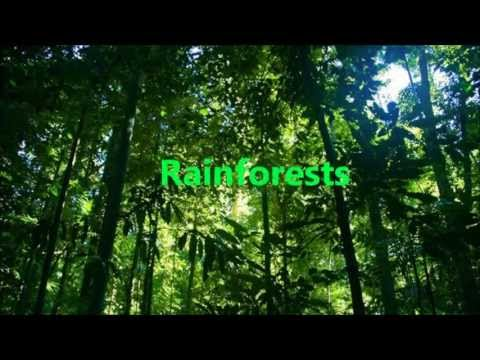 Rainforest News Report