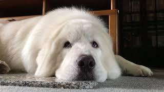 I am sleepy… . You who watch me become gradually sleepy, too. Boss…...